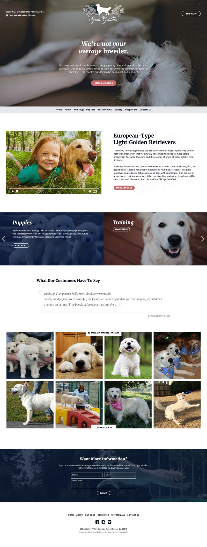 Syrah Goldens website redesign for white golden dog breeder.